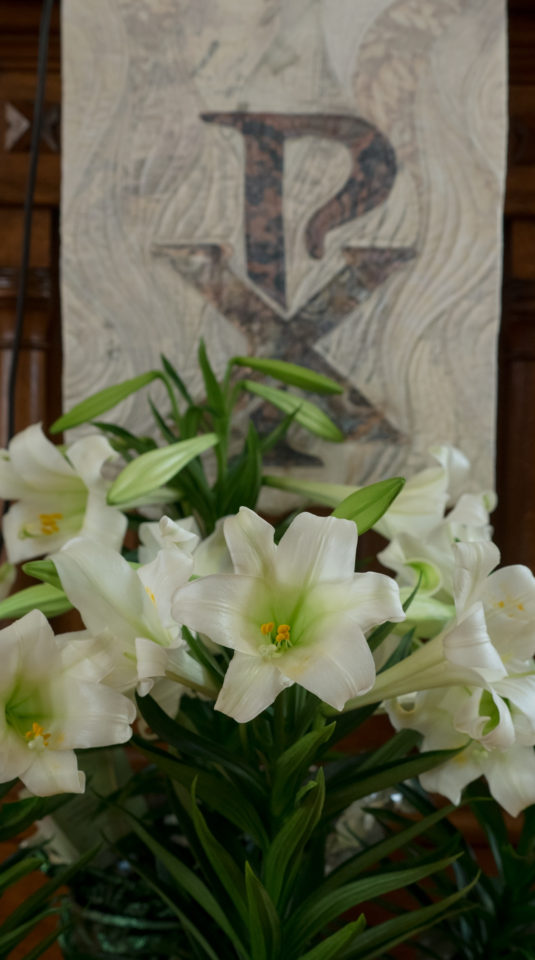 2017 – Altar Flowers – Easter Lilies